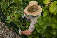 While temperatures are cooler, vines need protection from hail which is more common along mountain ranges (AFP/Josep LAGO)