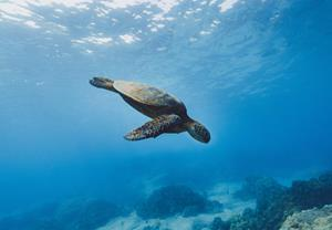 Image from the Galapagos Islands