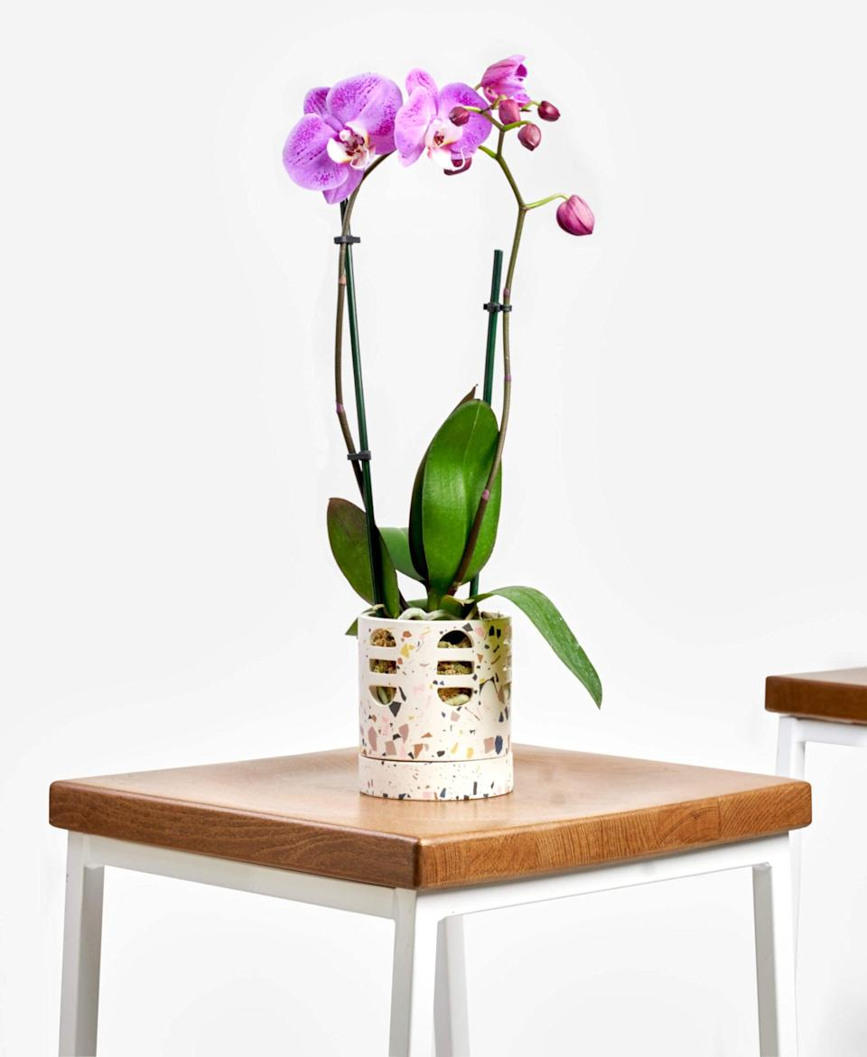 "<p>This <a href=""https://www.popsugar.com/buy/Potted-Orchid-Phalaenopsis-Indoor-Plant-568003?p_name=Potted%20Orchid%20Phalaenopsis%20Indoor%20Plant&retailer=bloomscape.com&pid=568003&price=80&evar1=casa%3Aus&evar9=47423087&evar98=https%3A%2F%2Fwww.popsugar.com%2Fphoto-gallery%2F47423087%2Fimage%2F47423326%2FPotted-Orchid-Phalaenopsis-Indoor-Plant&list1=shopping%2Chouse%20plants%2Cplants%2Chome%20decorating%2Cdecor%20shopping%2Cbloomscape&prop13=api&pdata=1"" class=""link rapid-noclick-resp"" rel=""nofollow noopener"" target=""_blank"" data-ylk=""slk:Potted Orchid Phalaenopsis Indoor Plant"">Potted Orchid Phalaenopsis Indoor Plant </a> ($80) would be a lovely gift.</p>"