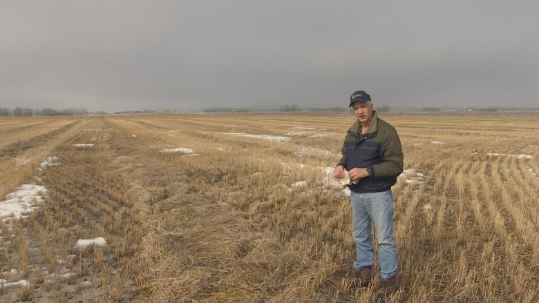 Farmers prepare to burn crops in Leduc County after fall harvest halted