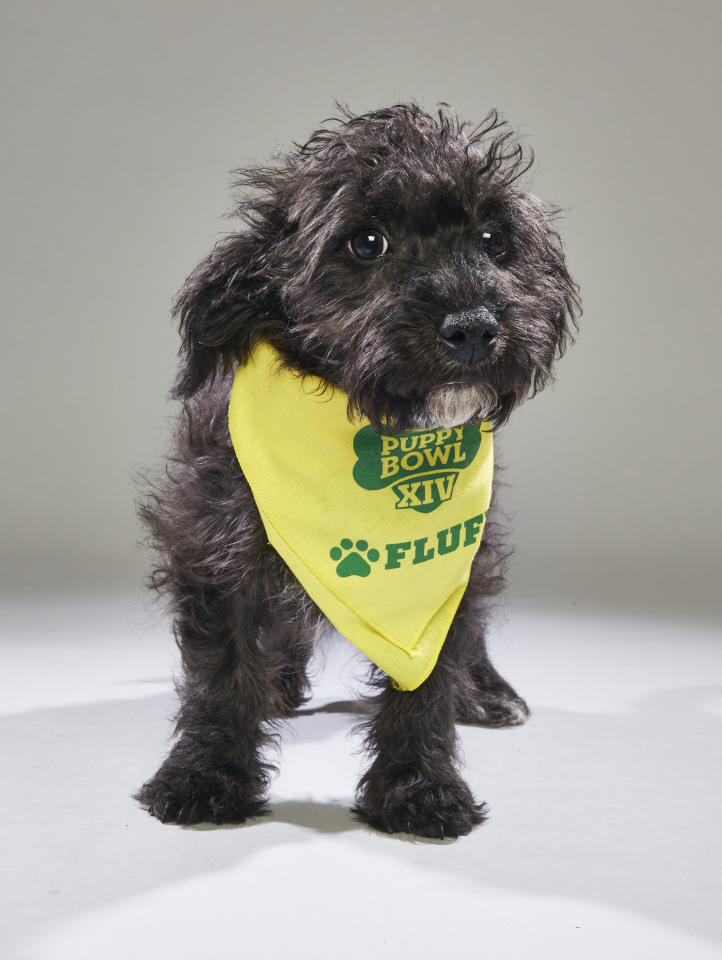 Team: Fluff<br /> From: Badass Brooklyn Animal Rescue<br /> (Photo: Animal Planet)