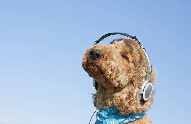 Spotify Wants Your Dog (and Iguana) to Have a Playlist of Its Own