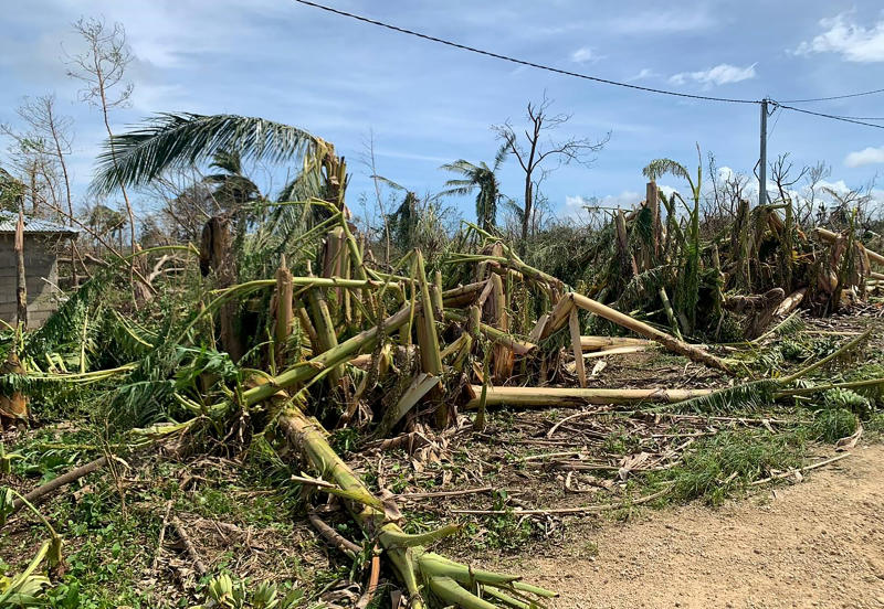 In this April 8, 2020 photo supplied by World Vision, shows a damaged crop from cyclone Harold on the island of Santo in Vanuatu.Vanuatu. New Zealand announced Wednesday, April 8, 2020 it would help Vanuatu rebuild from the cyclone with aid of up to 500,000 New Zealand dollars ($300,000). Foreign Minister Winston Peters said Cyclone Harold had destroyed homes, infrastructure and crops. (World Vision via AP)