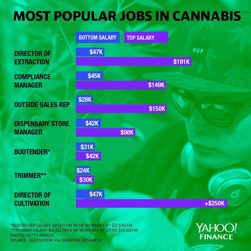 graphic showing most popular jobs in cannabis