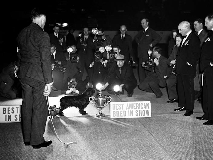 Photographers gather around the Best in Show, My Own Brucie, in 1941.