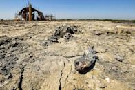 A dead fish on cracked, sun-baked earth in the Chibayesh marshland in Iraq's southern Ahwar area