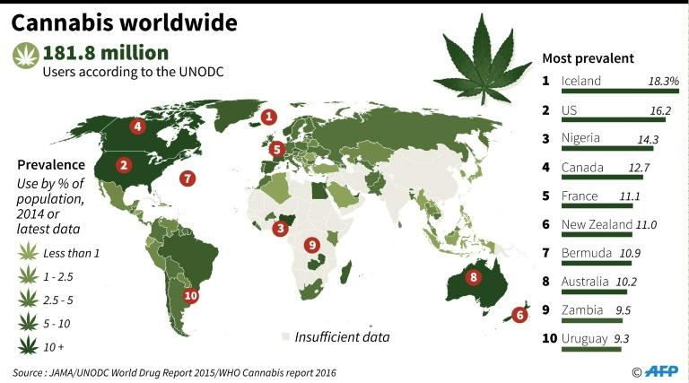 Graphic on estimated prevalance of cannabis use around the world