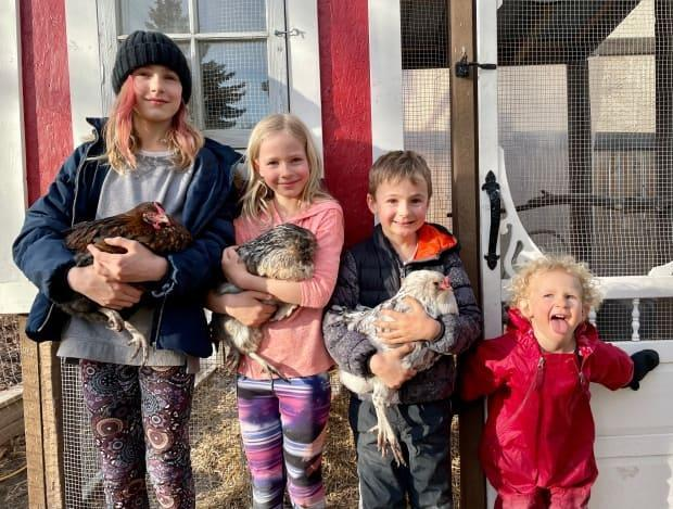 St. Albert's Taphorn family have three chickens: Doodles, T-Rex and Henny Potter. The family wants the number of hens permitted in backyard flocks raised from four to six. (Submitted by Heidi Taphorn - image credit)