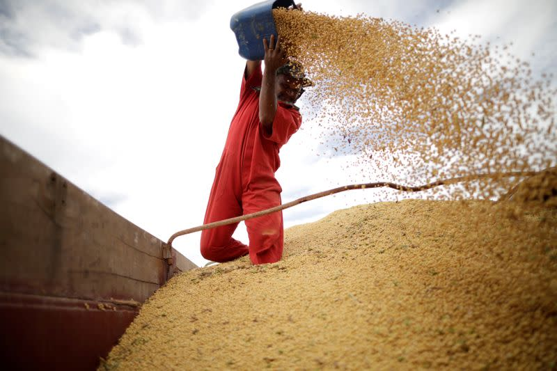 FILE PHOTO: A worker inspects soybeans during the soy harvest near the town of Campos Lindos