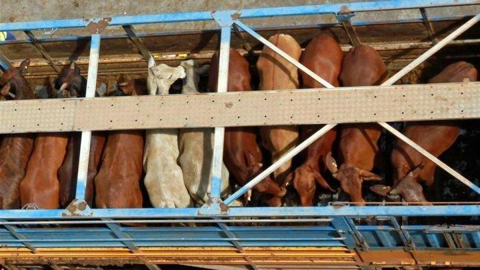 Strict export standards to reduce animal cruelty