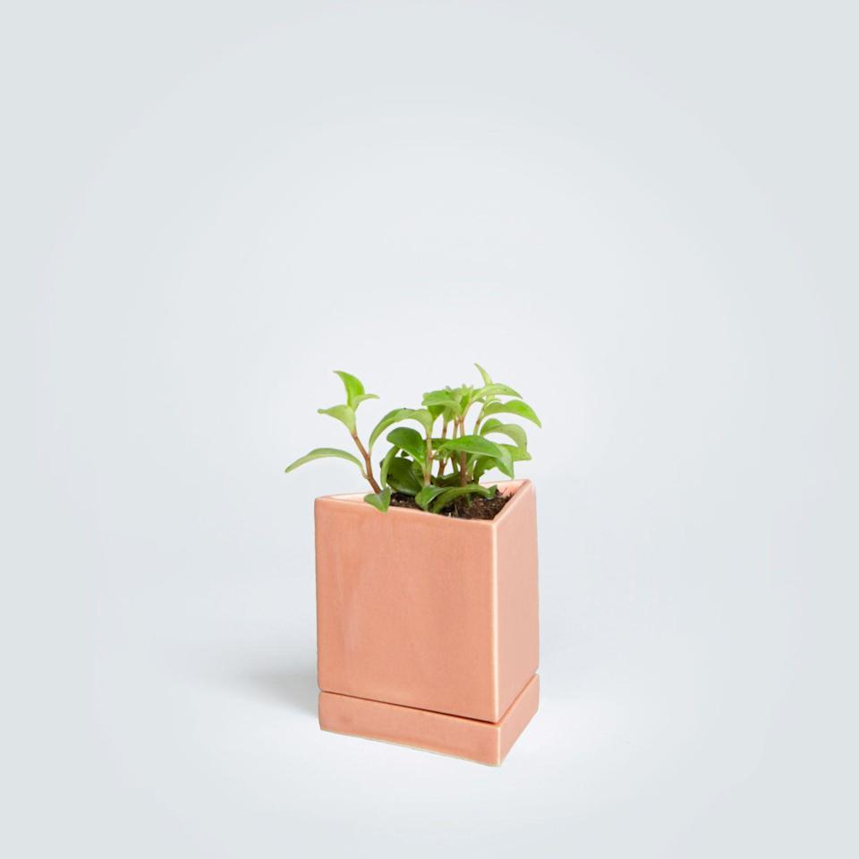 """<p>Cute and easy to care for, this radiator plant is an instant mood enhancer for your work space.</p><p><strong>The Sill</strong> Peperomia and Jules, $40, available at <a href=""""https://www.thesill.com/collections/all/products/peperomia-and-jules?variant=31840153745"""" rel=""""nofollow noopener"""" target=""""_blank"""" data-ylk=""""slk:The Sill"""" class=""""link rapid-noclick-resp"""">The Sill</a></p>"""