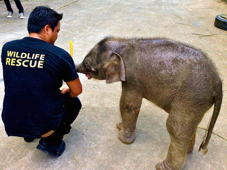 A wildlife official attends to an orphaned 3-month-old  pygmy elephant at Lok Kawi Zoo, Kota Kinabalu, January 31, 2013