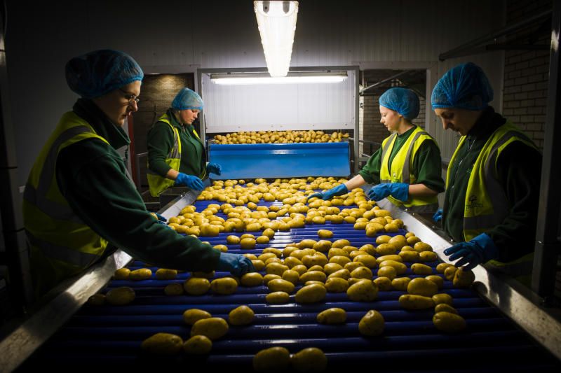 Young women checking new potatoes at a processing and packaging plant, UK (Photo by: Photofusion/Universal Images Group via Getty Images)