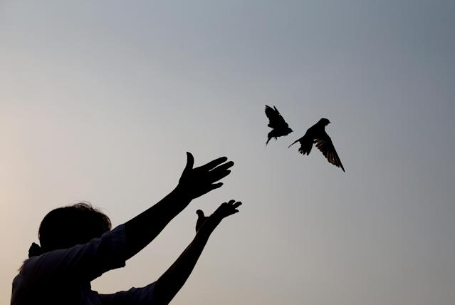 A woman releases sparrows as an offering to mourn Cambodia's former King Norodom Sihanouk in Phnom Penh, Monday, Feb. 4, 2013. Sihanouk's body had been lying in state at the Royal Palace after being flown from Beijing where he died Oct. 15 of a heart attack at the age of 89. The cremation, the climax of seven days of mourning, will take place Monday. (AP Photo/Wong Maye-E)
