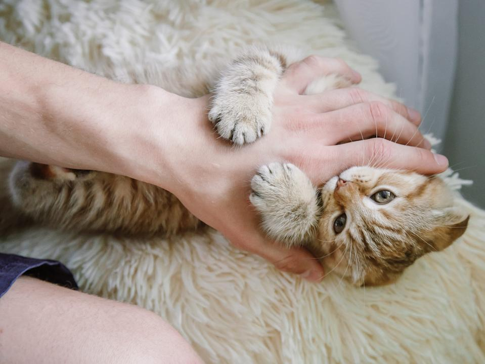 cat attacking hand