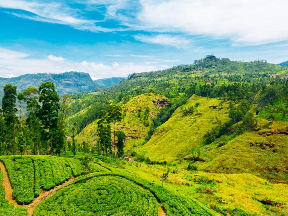 <p>Sri Lanka has been added to the list of travel corridors</p> (Getty Images/iStockphoto)