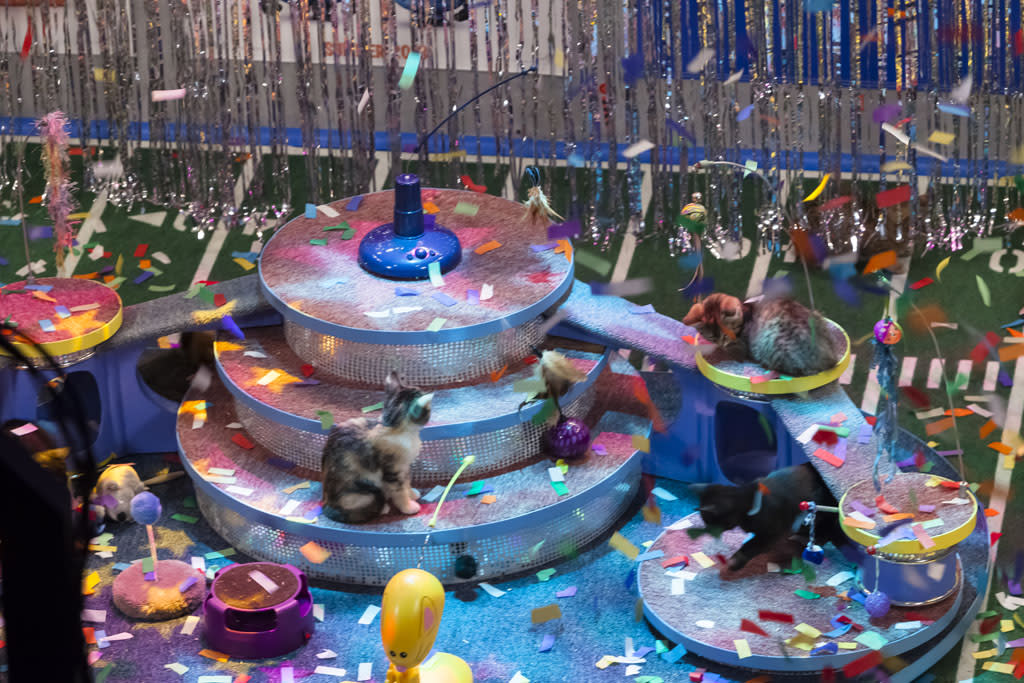 Overview of Kitty half time show with confetti falling on the field during Puppy Bowl IX.