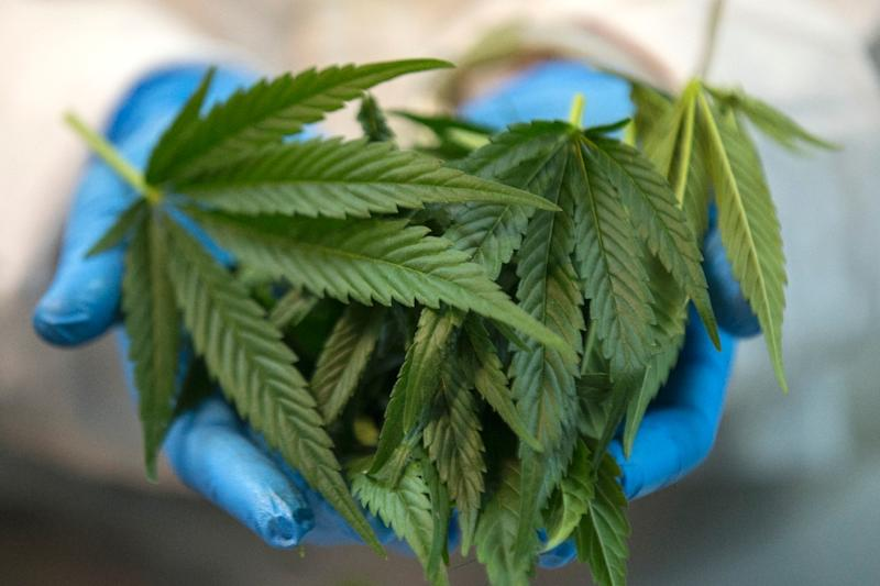 """The partial decriminalisation of marijuana for personal use in Israel has been called """"an important step on the way to implementing a new policy that will emphasise education and treatment instead of criminal enforcement"""""""