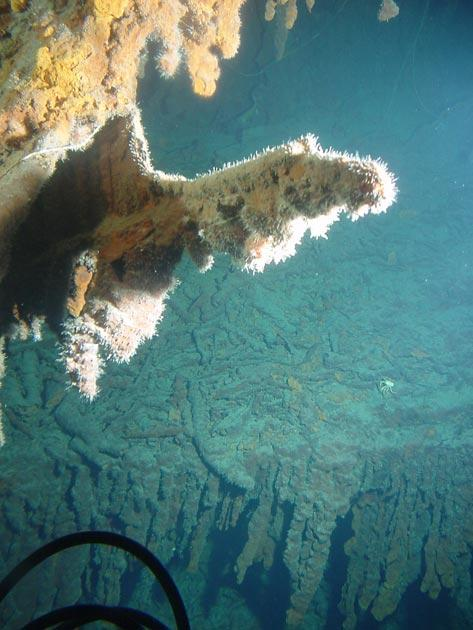 Rusticle hanging from the stern section of the RMS Titanic showing secondary growths during maturation. Image courtesy of Lori Johnston, RMS Titanic Expedition 2003, NOAA-OE.