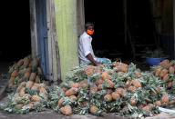 An Indian trader wearing a face mask waits for buyers next to a pile of pineapples at a wholesale fruit market in Bengaluru, India, Saturday, May 30, 2020. India started easing lockdown restrictions earlier this month, allowing reopening of shops and manufacturing and resumption of some trains and domestic flights and vehicles' movement. The federal government is expected to issue a new set of guidelines this weekend, possibly extending the lockdown in worst-hit areas. (AP Photo/Aijaz Rahi)