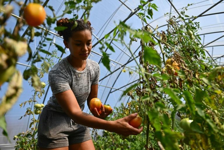 America's Black farmers work to uproot racism
