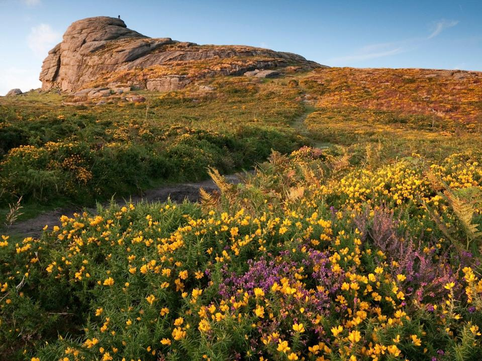 <p>Haytor on Dartmoor, owned by the Duchy of Cornwall. Centuries of human activity have left only tiny pockets of intact wilderness</p> (Getty )