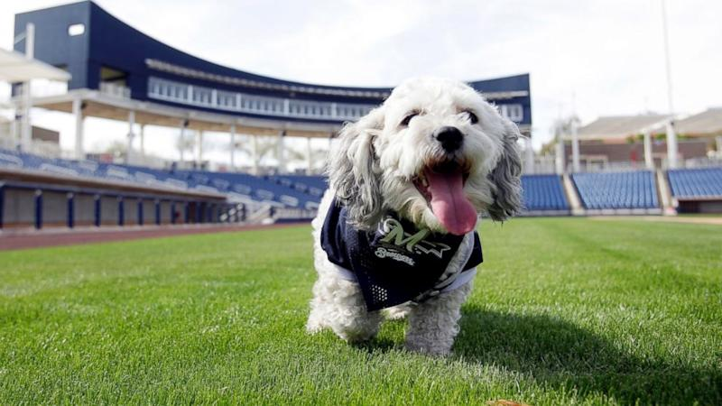 The Most Adorable Thing in Baseball Is a Stray Dog Named Hank