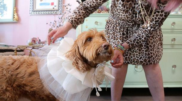 PHOTO: A dog is fitted for clothing at Los Angeles boutique Fifi & Romeo. (Olivia Smith/ABC News)