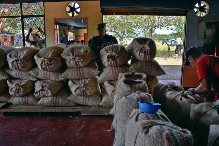 A farmer prepares sacks of cocoa beans to be taken to Bogota on a Colombian Air Force plane at Guerima village, in the municipality of Cumaribo, Vichada department, eastern Colombia, on February 16, 2017