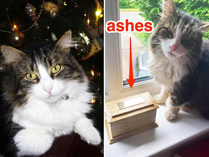 Two photos of a cat with white and brownish fur, one with a dark backdrop and the other in a windowsill next to a box of ashes from another pet.
