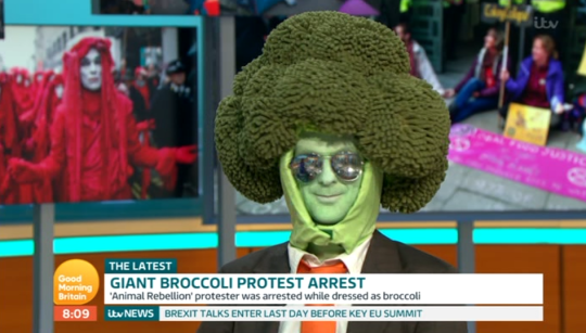 Mr Broccoli was a guest on Good Morning Britain (Credit: ITV)