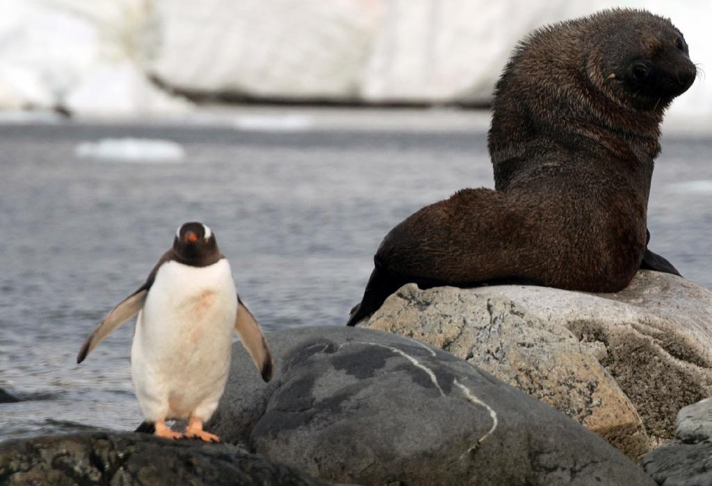 Antarctica is home to more than 10,000 unique species, including seals and colossal squid (AFP Photo/Eitan Abramovich)