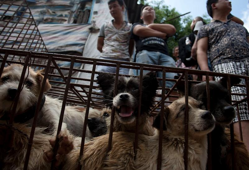 Vendors wait for customers to buy dogs in cages at a market in Yulin in southern China's Guangxi province on June 21, 2015 (AFP Photo/)