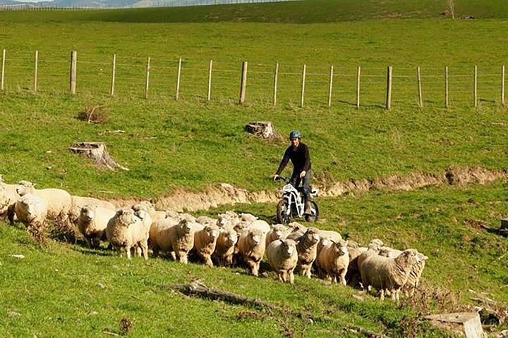 ubco-2x2-electric-utility-bike herding sheep