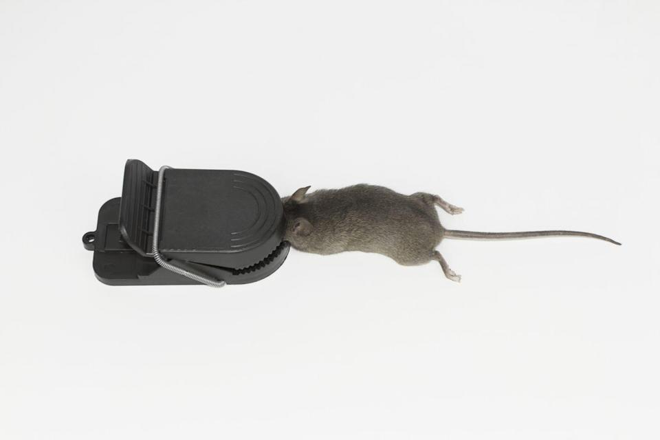 """<p>Rat poison is, well, poisonous. Though formulas have gotten less deadly over the years, this rodent killer can still <a href=""""http://npic.orst.edu/faq/mouse.html"""" rel=""""nofollow noopener"""" target=""""_blank"""" data-ylk=""""slk:cause internal bleeding"""" class=""""link rapid-noclick-resp"""">cause internal bleeding</a> in both people and pets. </p>"""