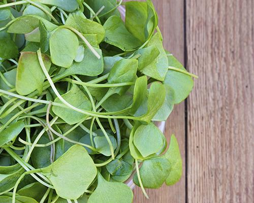 The study's author, Jennifer Di Noia, gave watercress a nutrient density score of 100, making it the top performing powerhouse vegetable. Put it on your shopping list right now!