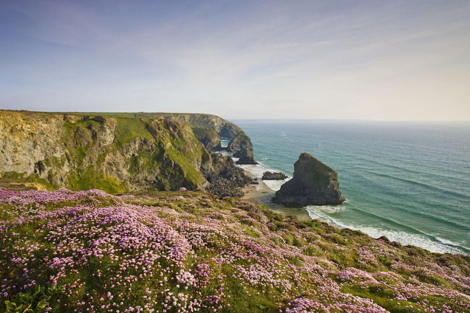 <p>Wildflowers cling to the cliffs overlooking the Bedruthan Steps in North Cornwall, England. </p>