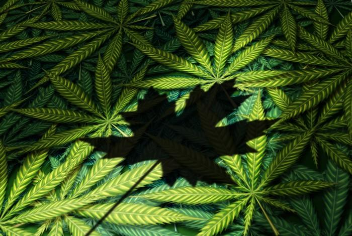 Shadow of Canadian maple leaf on top of a pile of cannabis leaves.