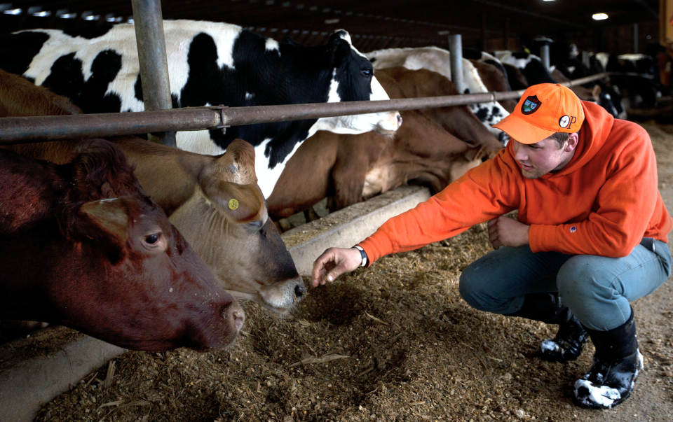 As U.S.-China trade tensions continue and the United States-Mexico-Canada Agreement (USMCA) awaits ratification, American dairy farmers are hurting.