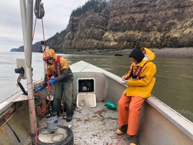 Using acoustic telemetry, the project studies the movement and habitat of three species in the Bras d'Or Lake and Bay of Fundy. (Apoqnmatulti'k/Facebook - image credit)