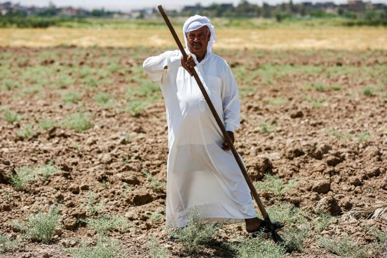 An Iraqi farmer in a parched field in the Khanaqin area, north of Diyala, in eastern Iraq