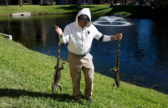 <p>A man carries two cold stunned iguanas found near a local pond following extreme cold weather in Lake Worth, Fla., Jan. 5, 2018. (Photo: Saul Martinez/Reuters) </p>