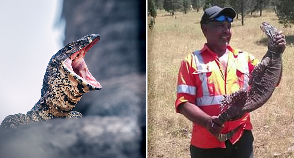 Pictured left is a lace monitor/goanna with its mouth open. Right is Kamilaroi man Alfred Priestley holding a dead goanna.