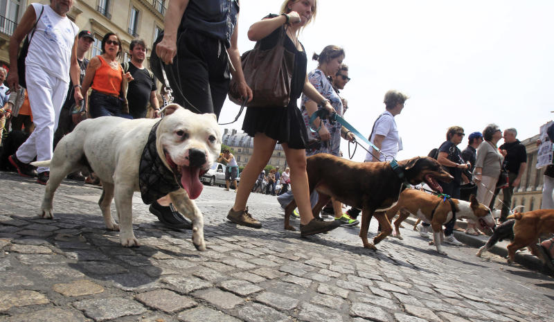 Dog owners march toward the Tuileries Gardens, in Paris, Saturday June 8, 2013. At least 100 pooches with owners in tow, holding leashes marched near the Louvre at a demonstration to demand more park space and access to public transport for the four-legged friends.(AP Photo/Remy de la Mauviniere)