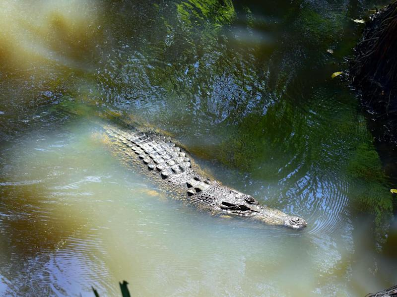 Anti-crocodile policies are common in north Queensland. Source: Shuttershock