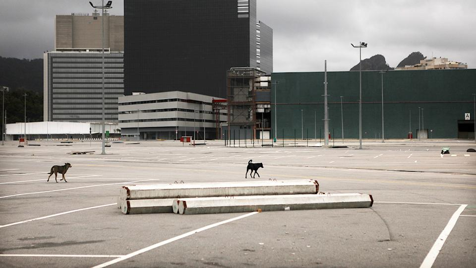 Dogs, walking through the abandoned Olympic Park in Rio de Janeiro.