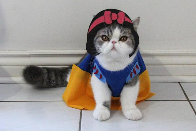 """<p>Snoopy channelling his inner princess to become Snow White. """"If I had to pick one it would have to be Batcat and Dobin (Batman and Robin),"""" Shirley says. (Photo: DailySnoopy/Caters News) </p>"""