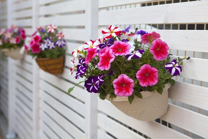 "<p>Make an ordinary fence a little more special by attaching pretty pots of flowers or draping vines. It's also a great way to obtain extra planting space, especially if you don't have a large yard or in-ground flower beds. </p><p><a class=""link rapid-noclick-resp"" href=""https://go.redirectingat.com?id=74968X1596630&url=https%3A%2F%2Fwww.homedepot.com%2Fp%2FThe-Terra-Latch-Terra-Cotta-Flower-Pot-Hanger-2-Pack-0001%2F205194041&sref=https%3A%2F%2Fwww.thepioneerwoman.com%2Fhome-lifestyle%2Fgardening%2Fg32651791%2Fdecorative-garden-fence-ideas%2F"" rel=""nofollow noopener"" target=""_blank"" data-ylk=""slk:SHOP FLOWER POT HANGERS"">SHOP FLOWER POT HANGERS</a></p>"
