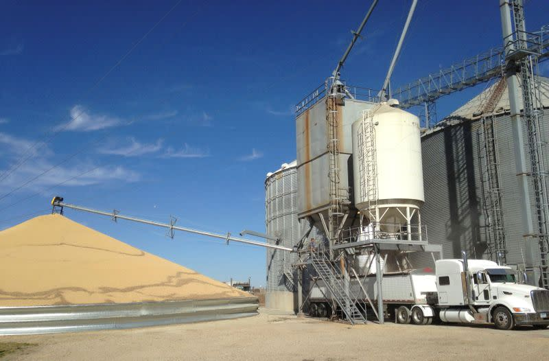 FILE PHOTO: A truck is loaded with corn next to a pile of soybeans at Matawan Grain & Feed elevator near New Richland Minnesota
