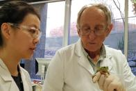Professor and research assistant look at a frog inside university laboratory in Newcastle